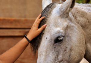 Hand streichelt Pferd